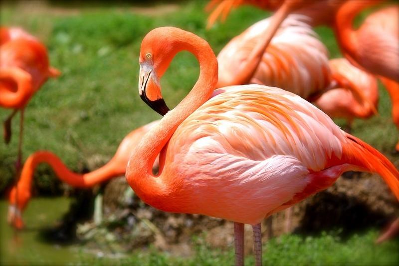 Flamingi w Zoo Wrocław
