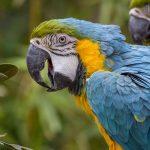 Zoo Wrocław – ceny, atrakcje i godziny otwarcia najstarszego Ogrodu Zoologicznego w Polsce
