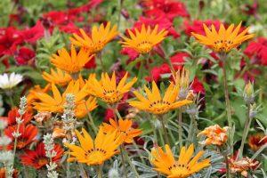 W Ogrodzie Botanicznym we Wrocławiu spotkać można wiele kwiatów